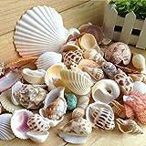 Topker 200g / pack Natural de la playa Shell y concha SeaShells Acuario Fish Tank Landscaping...