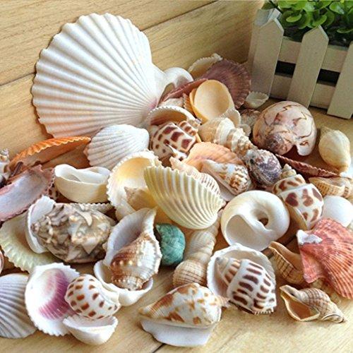 Topker 200g / pack Natural de la playa Shell y concha SeaShells Acuario Fish Tank Landscaping Decoración