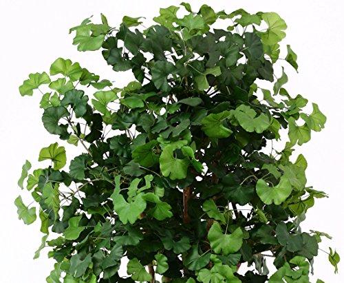 Ginkgo Kunstbaum 200cm mit 1144 Textilfaser Blätter und Naturstämmen