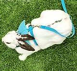 Kaninchen Geschirr Vest Liebenswürdig, Engel Flügel Leine Hund Katze Haustier Harness und passende Leine Set