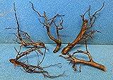 25-30 cm Moorkienwurzel Moorkienholz Garnelenbäumchen Wurzel