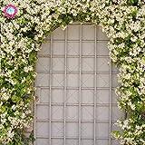 Planta al aire libre 20pcs Escalada Raras Semillas Las semillas de flor del jazmín jazmín fragante jazmín de Arabia Planta de