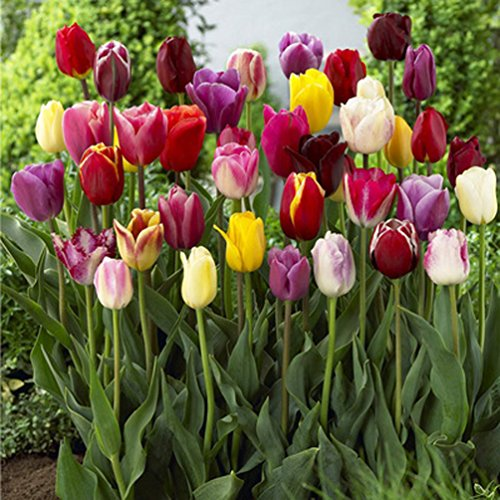 Soendgen Keramik Giardino E Giardinaggio Piante Semi E Bulbi