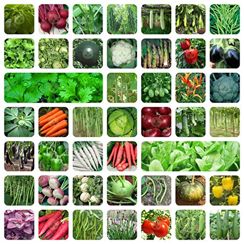 ONLY FOR ORGANIC 45 Variety Of Vegetable Seeds With Instruction Manual 61nE6o6NWNL