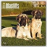 Mastiffs 2016 - 18-Monatskalender mit freier DogDays-App: Original BrownTrout-Kalender [Mehrsprachig] [Kalender] (Wall-K