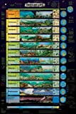 Frey Scientific Eras of Life Laminated Poster, 24 Width x 36 Height by Frey Scientific