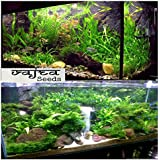Natural garden plants Aquarium Mixed Colourfull Plants with Aquatic Water Grass 350 Seeds Packet