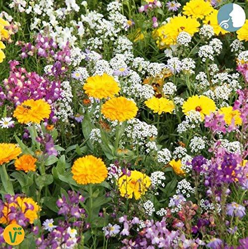 Qulista Samenhaus - 50pcs duftend Amerikanische Landblumenmischung bienenfreundlich Balkonkastenstauden | Statice Steingärten Blumensamen Mischung mehrjährig Winterhart