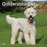 Goldendoodles 2019 - 18-Monatskalender mit freier DogDays-App (Wall-Kalender)