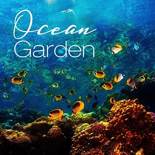 Ocean Garden - Biodiversity, Coral Reef, Waves Sound, Ocean Noise, Soft Waves, Nature, Water - Coral Garden