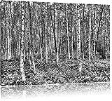 Monocrome, Birkenwald, Format: 100x70 auf Leinwand, XXL riesige Bilder fertig gerahmt mit Keilrahmen, Kunstdruck auf Wandbild mit Rahmen, günstiger als Gemälde oder Ölbild, kein Poster oder Plakat