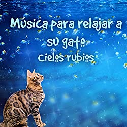 Música para relajar a su gato