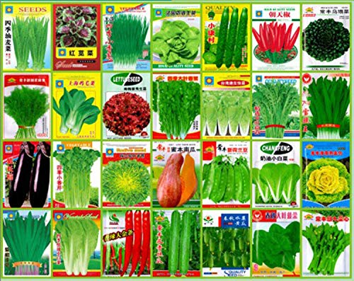 Shoopy Star Fenouil 100 graines: emballage de vente au détail coloré économique NON OGM image Jardin Jardin Graines de légumes