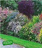 BALDUR-Garten Sommer-Hecken-Kollektion, Blütenhecke Blühhecke 5 Pflanzen Caryopteris, Hypericum, Deutzia strawberry field, Spirea und Weigelie