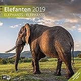 Elefanten 2019, Wandkalender / Broschürenkalender im Hochformat (aufgeklappt 30x60 cm) - Geschenk-Kalender mit Monatskalendarium zum Eintragen