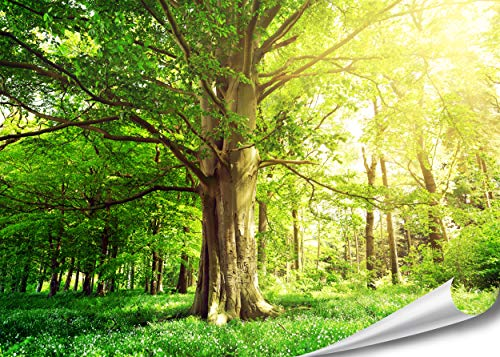 PMP-4life Baum-Poster | 140x100cm | hochauflösendes XXL Wand-Bild Baum, Natur Poster extra groß, XL Fotoposter | Wand-deko Bild Landschaft Bäume Blumen Wald -