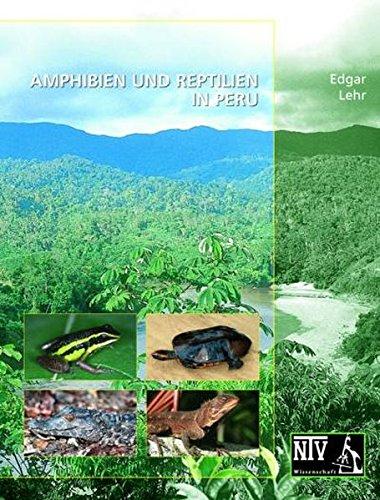 Terrestrial-Breeding Frogs (Strabomantidae) in Peru (NTV Wissenschaft)