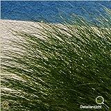 LanaKK – Insel Dünen – Fototapete Poster-Tapete – edler Kunstdruck auf Vliestapete mit Stuck Optik in 240×240 cm - 4
