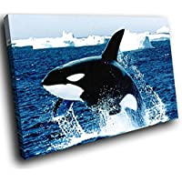 A046 Blue Black Killer Whale Funky Animal Canvas Wall Art Picture Prints