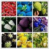 100pcs 9 Sorten Wahl Erdbeeresamen Topferdbeerfruchtsamen Bonsai Balkon Terrasse Gartenpflanze DIY Mix
