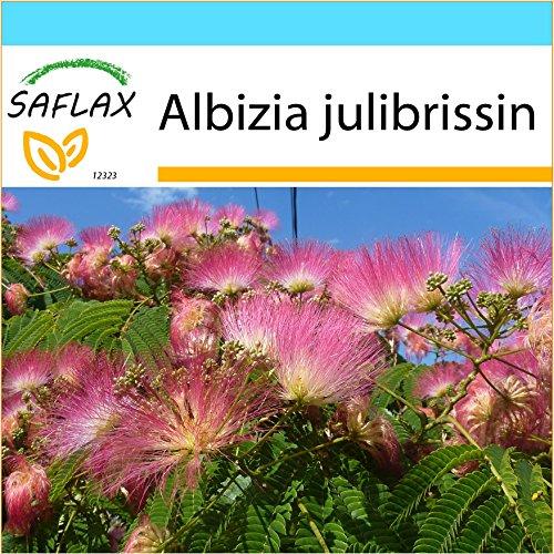 SAFLAX - Kit cadeau - Albizia - 50 graines - Albizia julibrissin