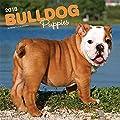 Bulldog Puppies - Bulldoggen Welpen 2018 - 18-Monatskalender mit freier DogDays-App: Original BrownTrout-Kalender [Mehrsprachig] [Kalender] (Wall-Kalender)