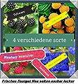 40x Himbeeren Mix Samen Saatgut Hingucker Pflanze Rarität essbar Himbeere selten Neuheit Garten #12 von Samenhandel Ipsa Import und Handel bei Du und dein Garten