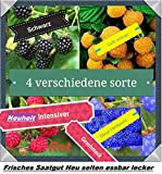40x Himbeeren Mix Samen Saatgut Hingucker Pflanze Rarität essbar Himbeere selten Neuheit Garten #12