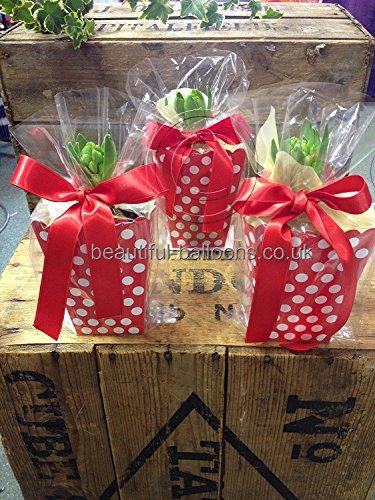 16klar Zellophan und rot doppelseitig satinband-Weihnachten kleine Geschenke Partytüten Pflanzen ()
