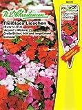 Fleißiges Lieschen 'Accent- Mixture' F1 große Blüten, früh und langblühend, kompakt ( mit Stecketikett) 'Impatiens walleriana'