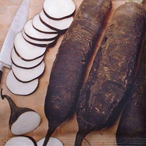 Radis dhiver- Noir gros long - 1 sac de graine