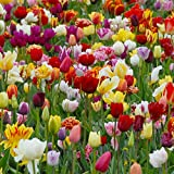 Bulbi da Fiore ALTA QUALITA' per fioritura PRIMAVERILE (10, Tulipani misti MIX)