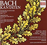 Cantates BWV 26, 173 & 173a [Import allemand]