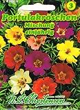 Portulakröschen Mischung, einjährig, 'Portulaca grandiflora'