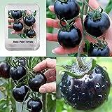 Un pacchetto di 100 pezzi nero Pearl pomodoro semi balcone verdure Bonsai in vaso Pianta di pomodoro semi, # FQ003