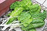 AGROBITS Acelgas, Fordhook acelga, Para los Verdes de ensalada fresca, 35 semillas! Groco