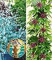 BALDUR-Garten Winterharter Eukalyptus & Winterharte Passionsblume, 2 Pflanzen von Baldur-Garten - Du und dein Garten