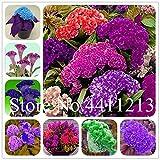 Pinkdose Bonsai 200 pezzi Fiore bonsai Celosia cristata, fiori di gallo fiorellini, piante plantasling fiori per la casa & amp; decorazione del giardino: misto