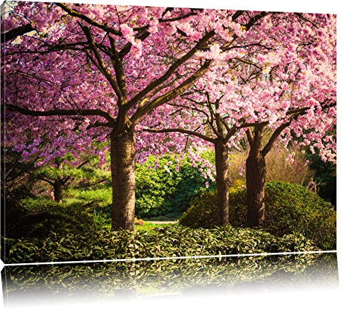 pink-flowering-cherry-trees-canvas-xxl-huge-pictures-completely-framed-with-stretcher-art-print-on-w