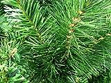 TOP Weihnachtsbaum kuenstlich 180cm - 6
