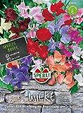Sperli-Samen Wicke SP. Überriesen, Prachtmischung