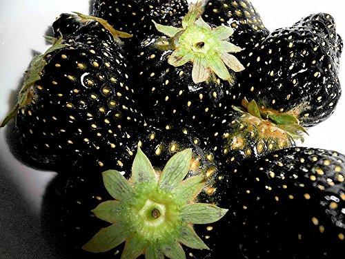 Fraises noires - 30 graines