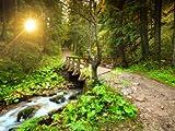 wandmotiv24 Fototapete Vliestapete Waldweg mit Bach KT397 Größe: 350x260cm Natur Fluss Landschaft