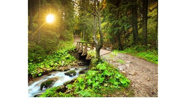 Fototapete waldweg  Fototapete Waldweg mit Bach KT397 Größe: 350x260cm Natur Fluss ...