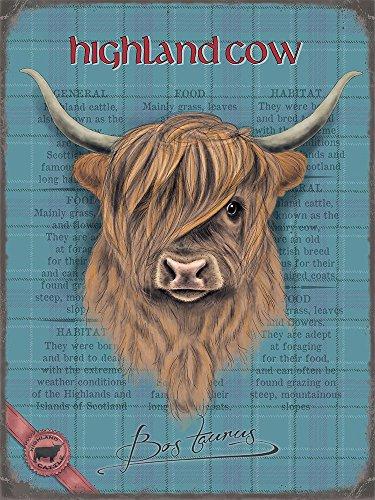 Unbekannt Highland Cow Kuh Blechschild Stabil Flach Neu 30x40cm S4554