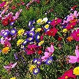 Vavrica Owens Gartensamen- Selten Wildblumen Blumen mischung Schmetterling & Biene freundlich Mix Wiese Samen Mehrjährige Pflanzensamen winterhart Samen (200)