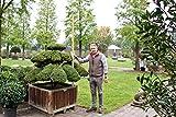 Japanischer Garten Bonsai Japanische Eibe - Taxus cuspidata winterhart Unikat Outdoor Bonsai
