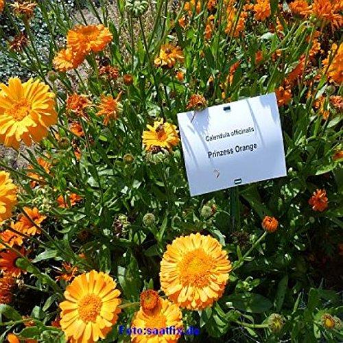 Sommerzauber Pflückmischung - Bienenwiese Blumenwiese-Mischung für ca. 750-1000m²