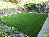 Shopmeeko 500 stücke Rasen Rasen pflanzen Gras pflanzen Frische Grüne Weiche Runner Turfgrass für home park fußball golfplatz hardy gras