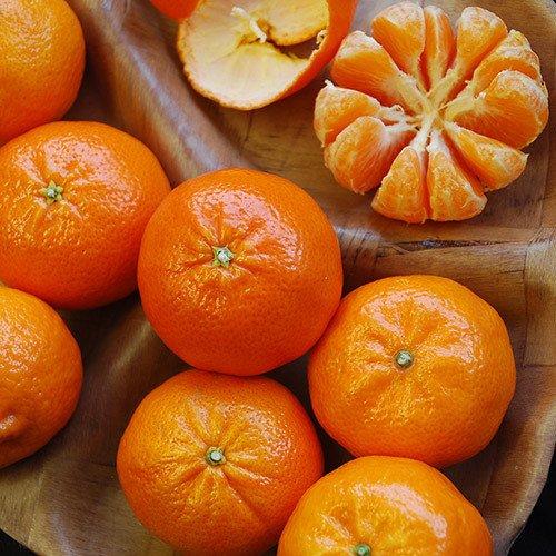 Plant World Seeds - Orange Satsuma (mandarin/tangerine) Seeds -